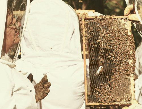 January 2019 Field Day: A Beehive Inspection Checklist