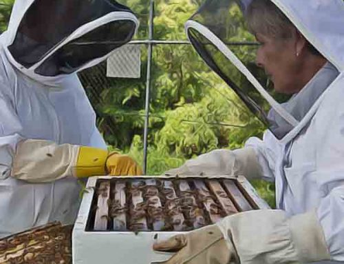 New 2019 Beekeeping for Beginners Course Dates Announced