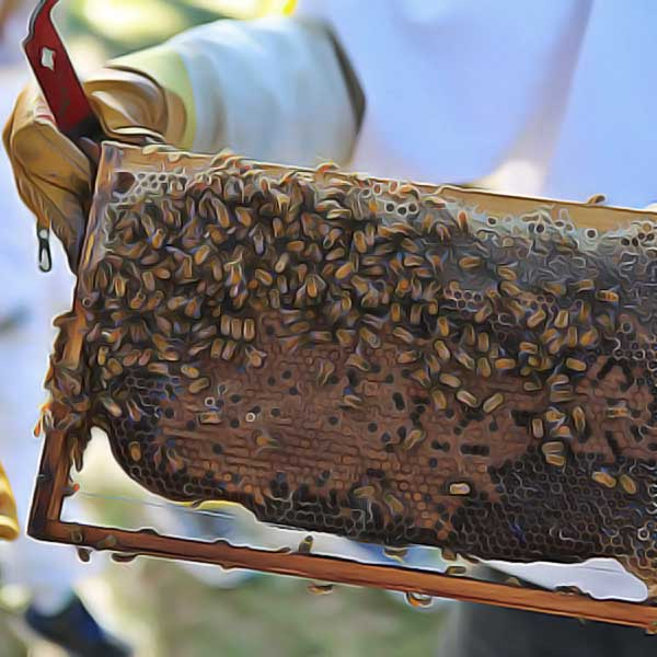 beekeeping-courses-announced