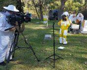 sbs-world-news-beekeeping-manuka-honey-01