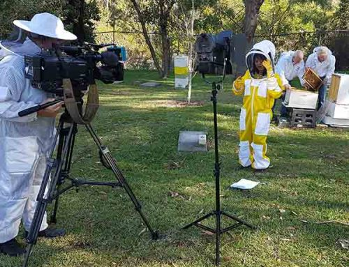 SBS World News Story on Manuka Honey Filmed at our Apiary