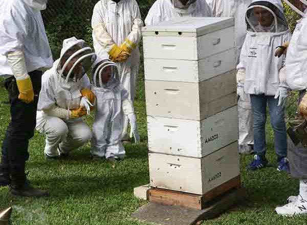 visitors inspecting a beehive at Heritage-Festival-2017-illawarra-beekeepers-open-day