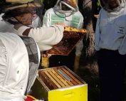 illawarra-beekeepers-field-day-20170528-121843