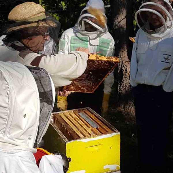 illawarra-beekeepers-field-day-20170528-121843
