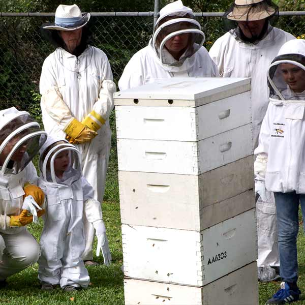 open-day-2018-illawarra-beekeepers-600px