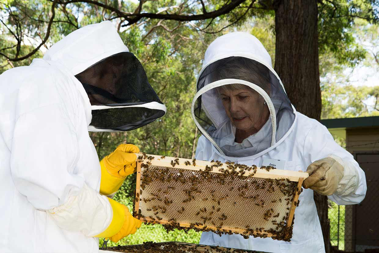 beekeeping courses sydney by illawarra beekeepers