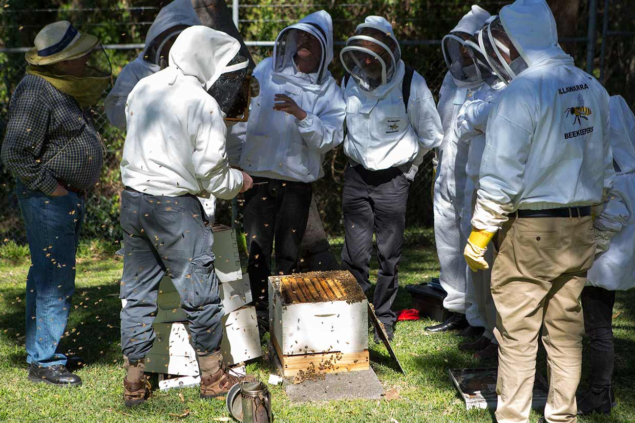 Illawarra-Beekeepers-Association-012-20160827-field-day