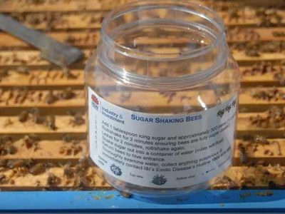 sugar-shake-method-detecting-varroa