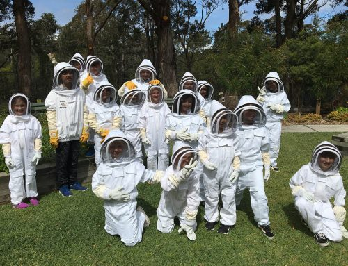 President Report: Bees & Pollinators School Holiday Program