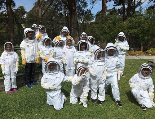 President Report: Bees & Pollinators School Holiday Program