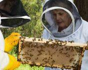 beekeeping course illawarra beekeepers