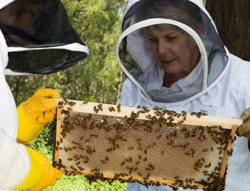 New Beekeepers Course 02 FEB 2019