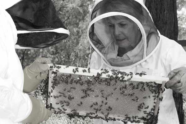 beekeeping course illawarra beekeepers bnw