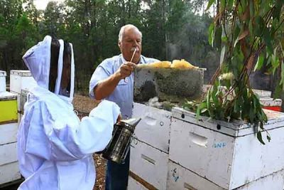 beekeepers-inn-orange-beehive-inspection