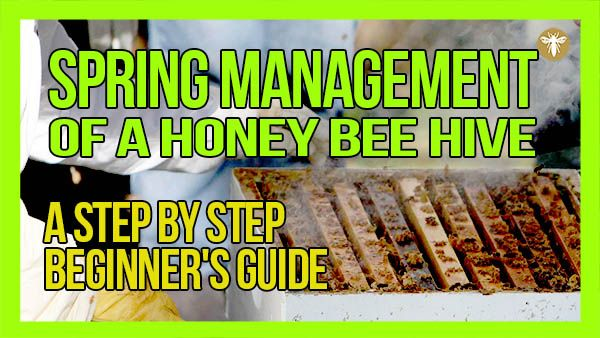 spring-management-of-a-honey-bee-hive-website-thumbnail