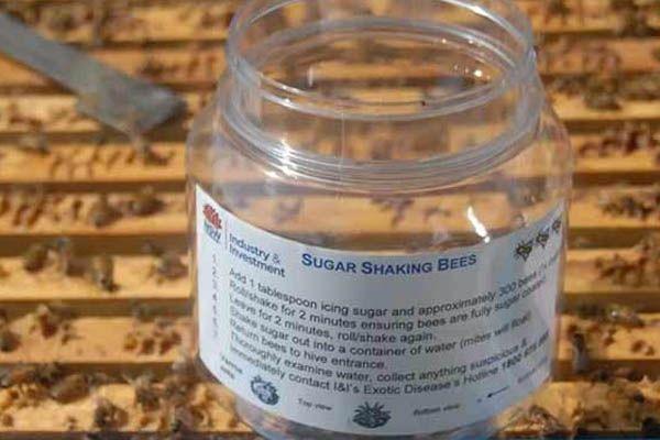 sugar-shake-illawarra-beekeepers