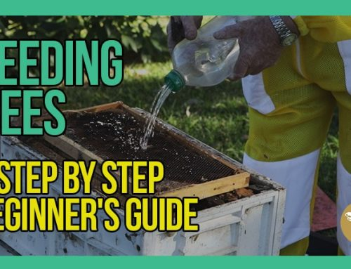 Feeding Bees with Bruce White