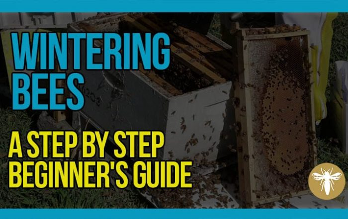 wintering-hives