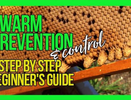 Swarm Prevention & Control Video with Bruce White