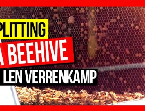 Splitting a Beehive ft Len Verrenkamp  | ABA of NSW Field Day