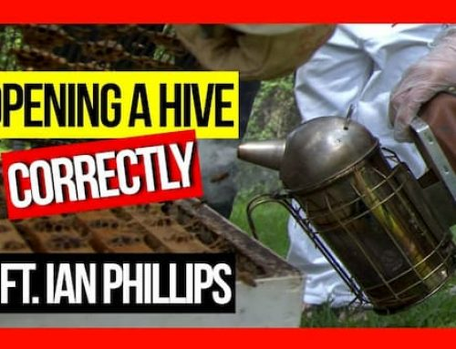 Opening a Hive Correctly ft Ian Phillips | ABA of NSW Field Day 2019 Video