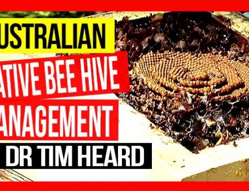Native Beehive Management  | ABA of NSW Field Day 2019 Video