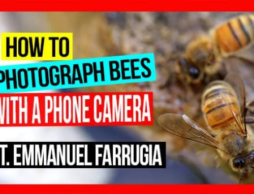 How to Photograph Bees with a Phone Camera: Pros & Cons | ABA of NSW Field Day 2019 Video