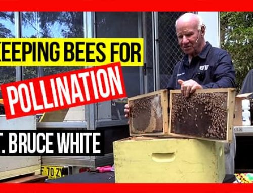 Keeping Bees for Pollination | ABA of NSW Field Day 2019 Video