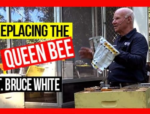 Replacing the Queen Bee in a Hive ft Bruce White | ABA of NSW Field Day 2019 Video